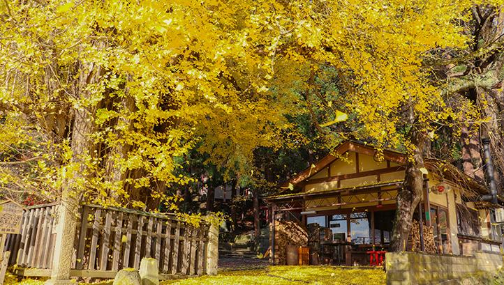 秋のお祭り